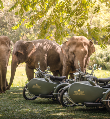 Traversez la jungle du nord de la Thaïlande en sidecars avec Anantara Golden Triangle Elephant Camp & Resort
